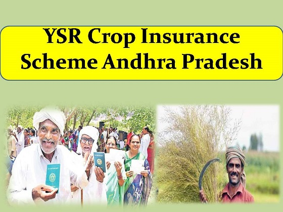 YSR Crop Insurance Scheme